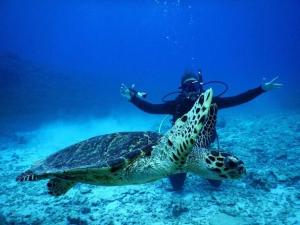 Tame Life diving in japan